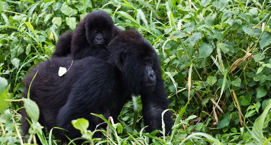 R-06-congo-Virunga-National-Park-Cai-Tjeenk-Willink