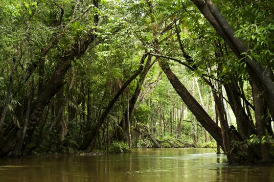 Selva-Amazonica-560x372