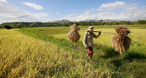 Timor-Leste Farmer Carries Away Crops Destroyed by Heavy Rains