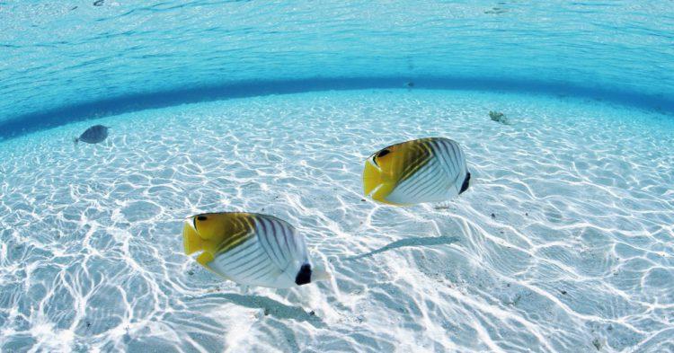 Maldives_Water_and_Fish_wallpaper